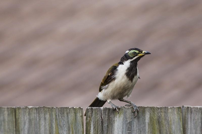 On Fence