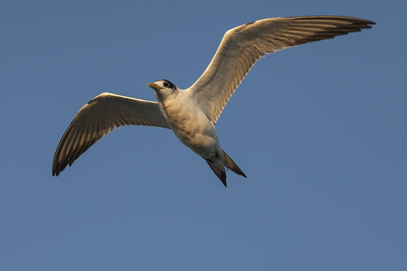 Another Tern