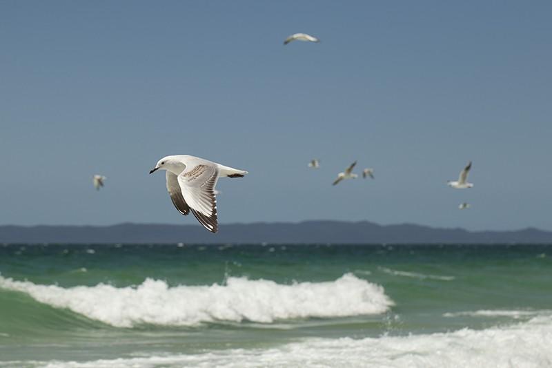 Flock o' Seagulls