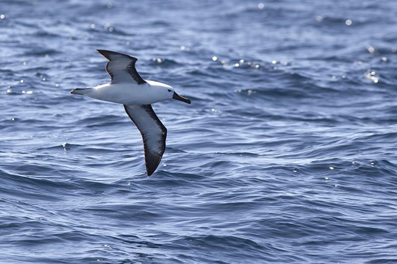 Albatross Two
