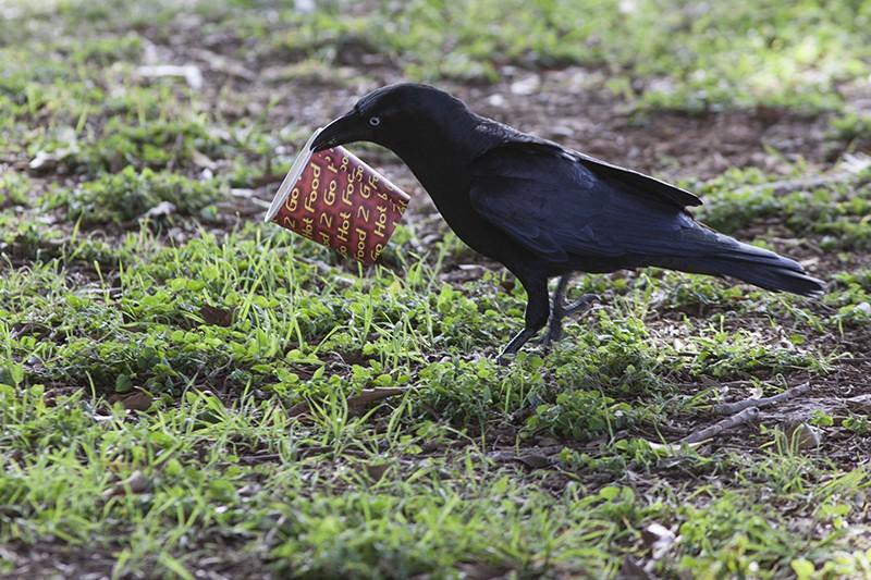 Takeaway Crow