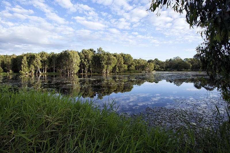 Marsh Edge