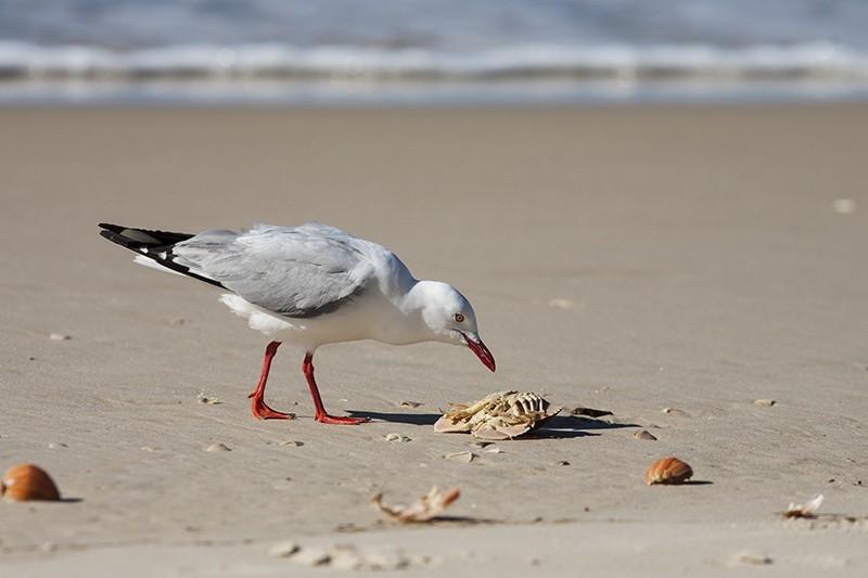 Crab Snack