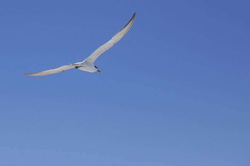 Tern Away