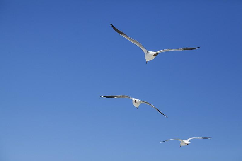 Sea Trio