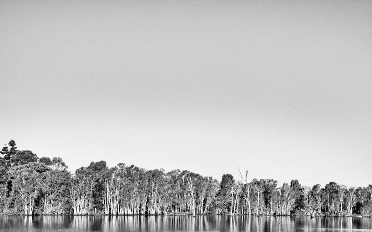 Calm Trees