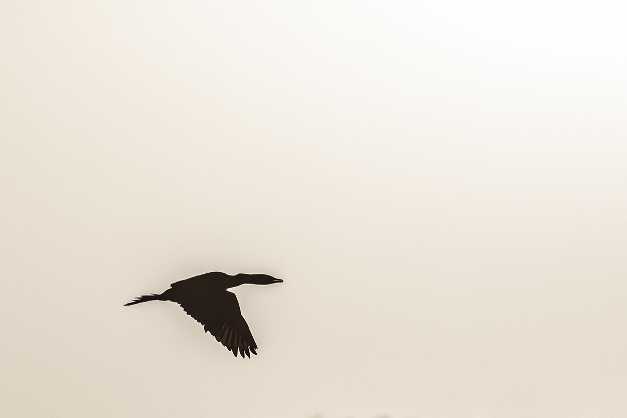 Darter Glide