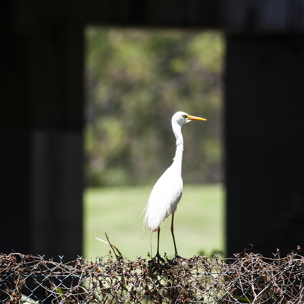 Egret Window