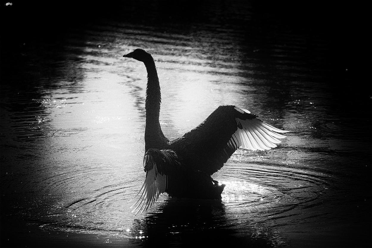 Swan Reach