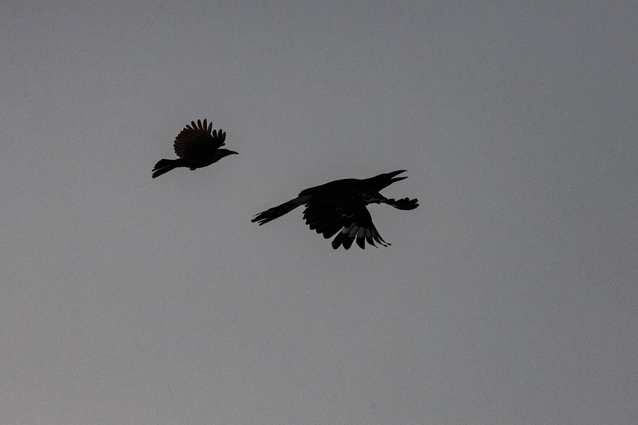 Versus Magpie