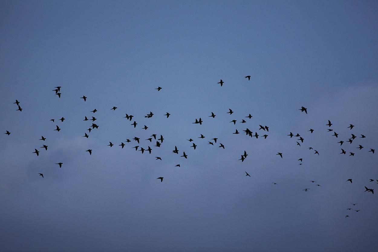 Flock o' Lorries