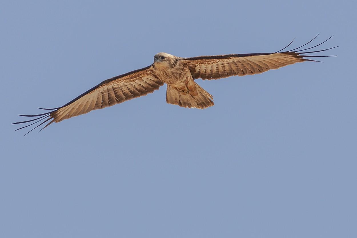 Kite Reach