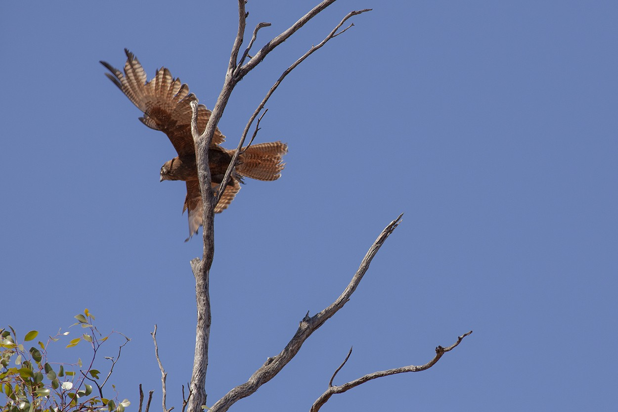 Falcon Depart
