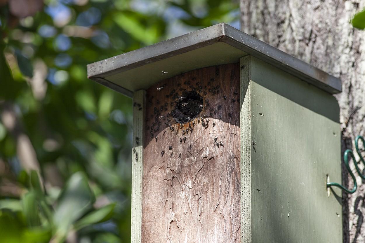 Nesting Box Invaders