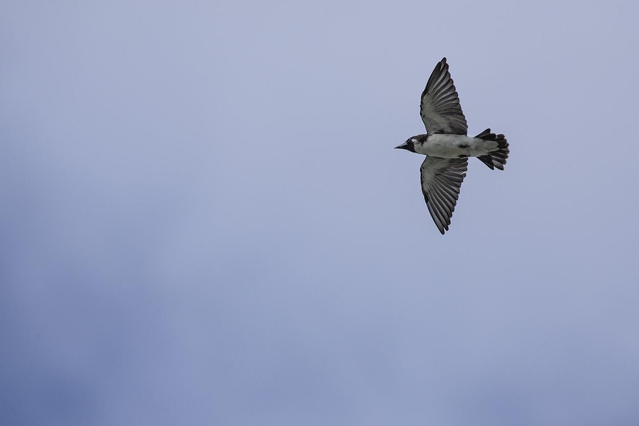 Wing Feeder