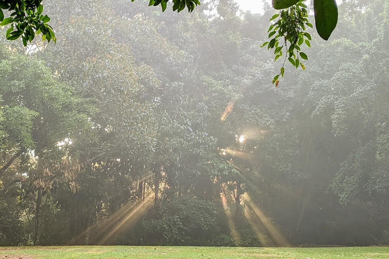 Park Rays