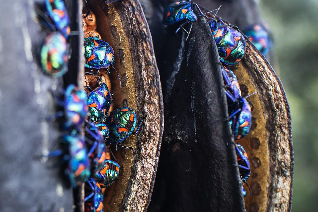 Opal Scrum