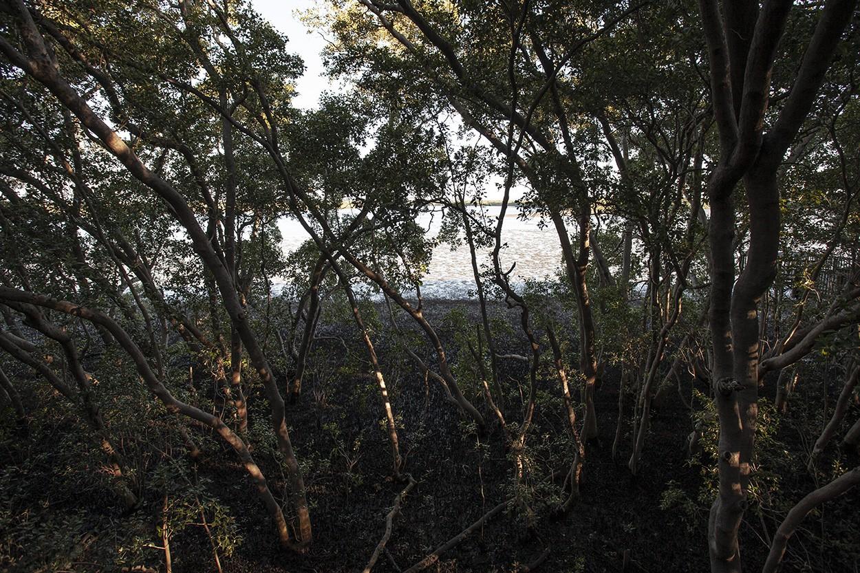 Afternoon Mangroves
