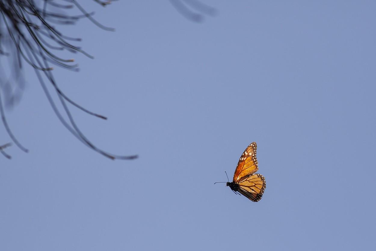 Butter Flight