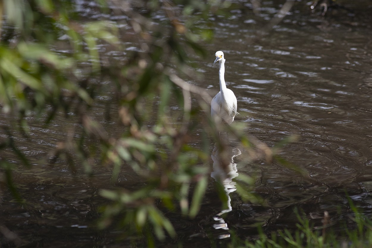 Egret Sighting