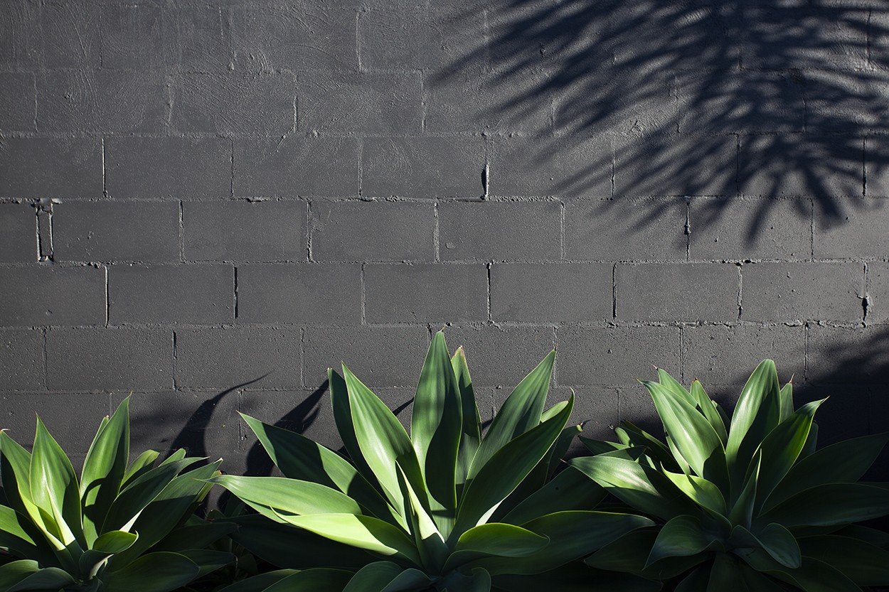 Agave Wall