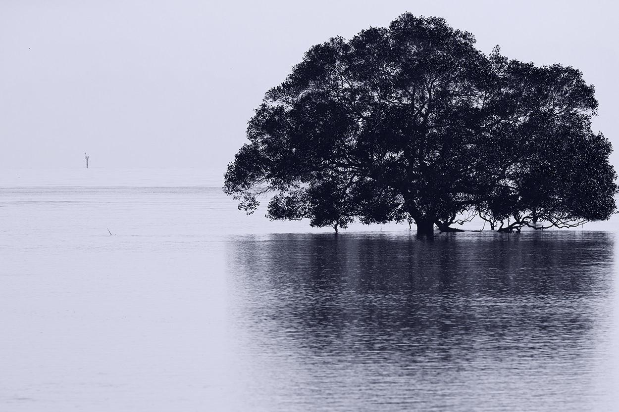 Moreton Mangrove