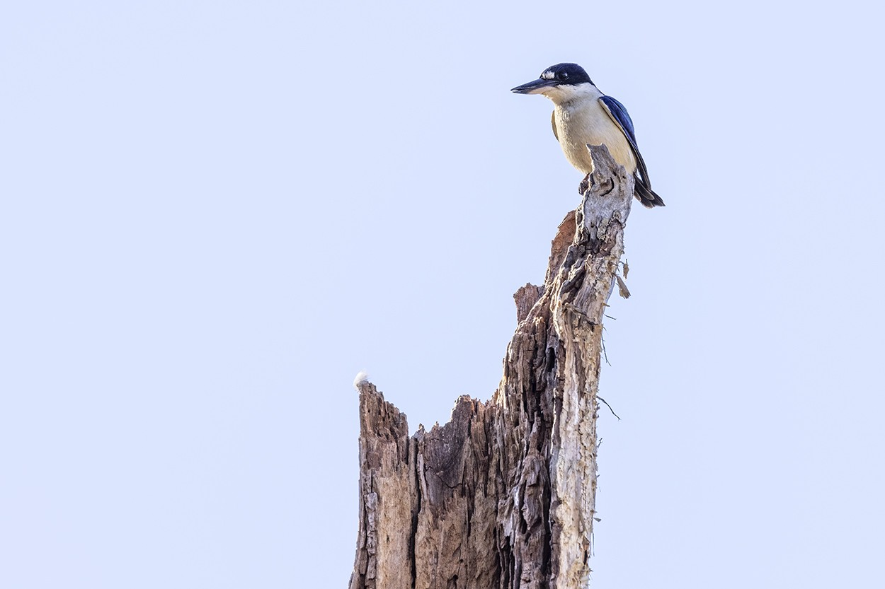 Kingfisher Lookout